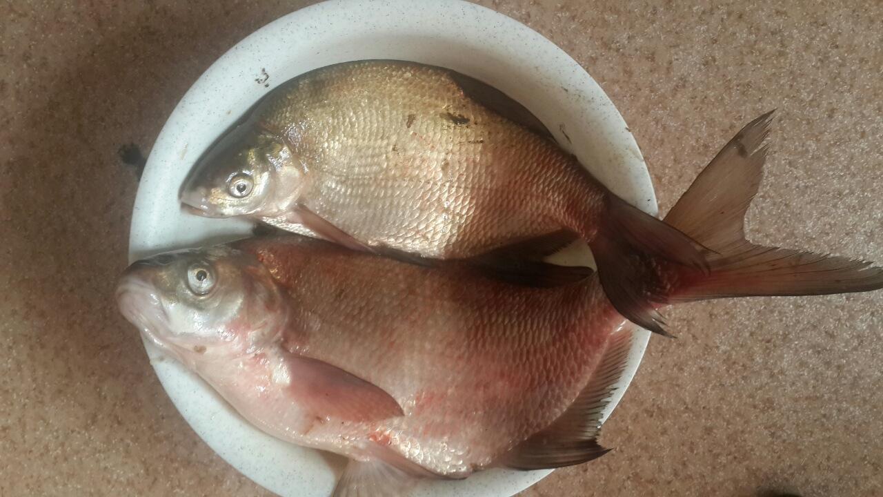 рыбхоз прогноз клева кировоградская область.стоит ли ехать